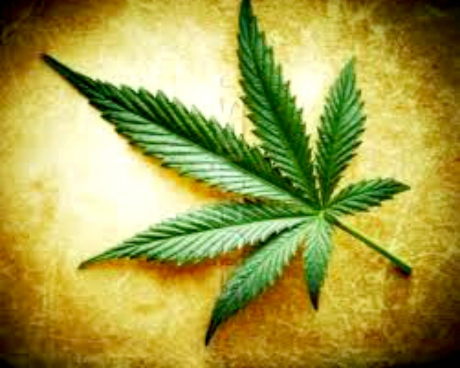 Pro e contro cannabis