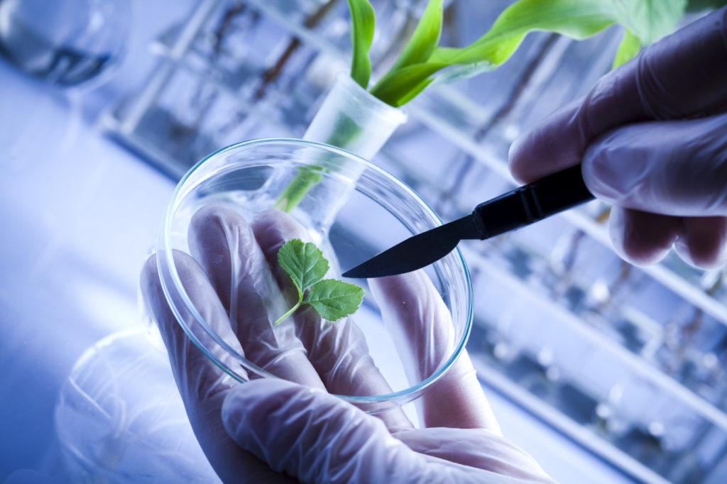 biotecnologie verdi