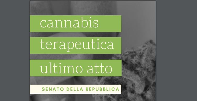 cannabis uso terapeutico